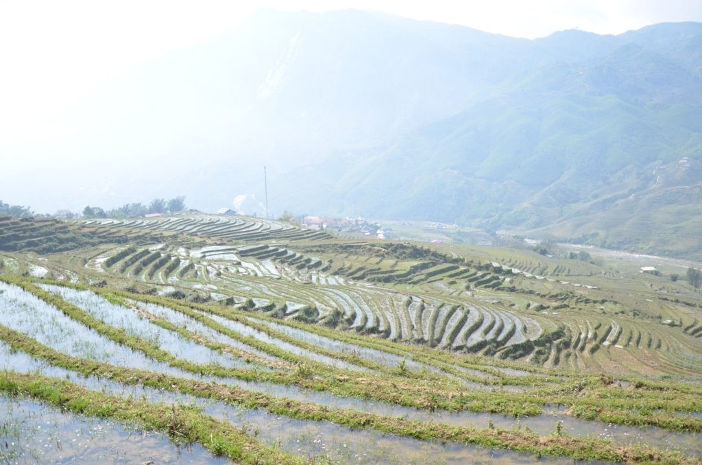 A beautiful view of a Rice field in Sapa
